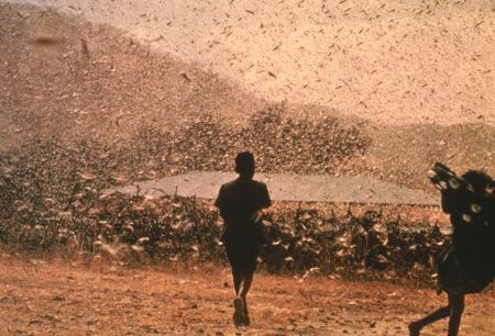 Egyptians plagued with locusts, just like in the days of Moses