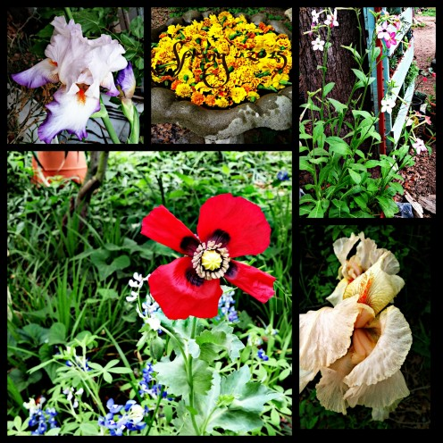 Just a sampling of the colorful array of flowers we enjoyed at our old place.